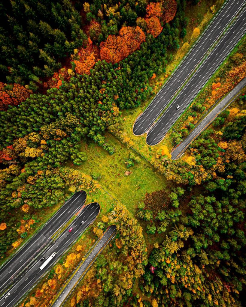Photo-of-ecoduct-in-the-Netherlands-smart-Dutch-invention