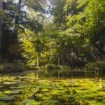 Schoonoord pond by Yoreh Schipper