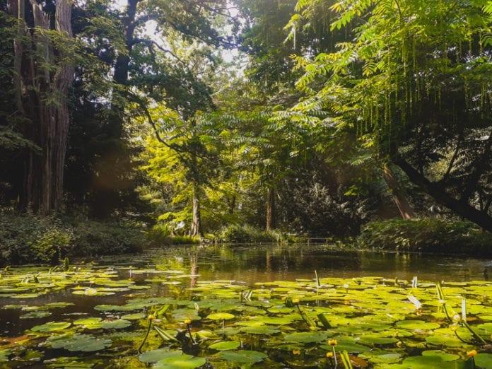 Schoonoord pond