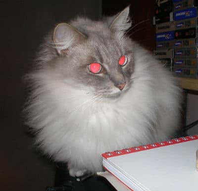 Although certain cats with scary eyes can scare you out of your house
