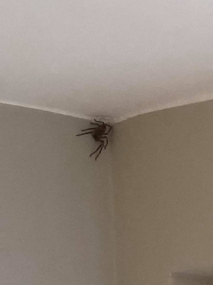 spiders in the Netherlands