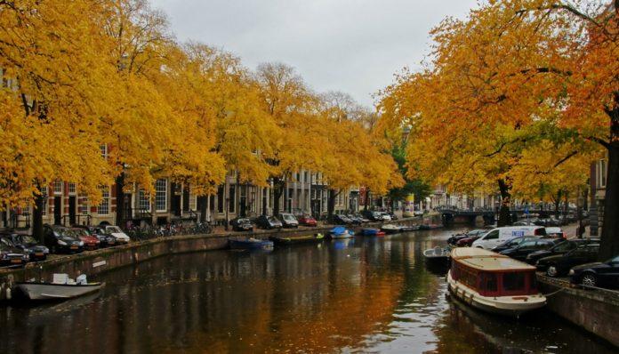 golden leaves - autumn in Amsterdam