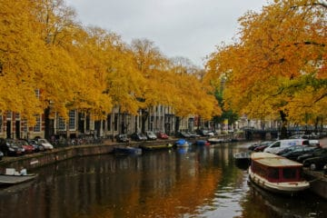 golden leaves - autumn in Amsterdam