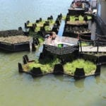 floating park in Rotterdam