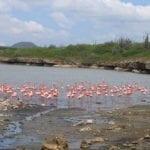 640px-Bonaire_Pink_Flamingos