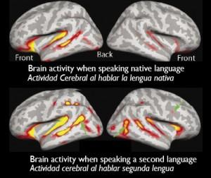 Actividad_en_cerebro_bilingue