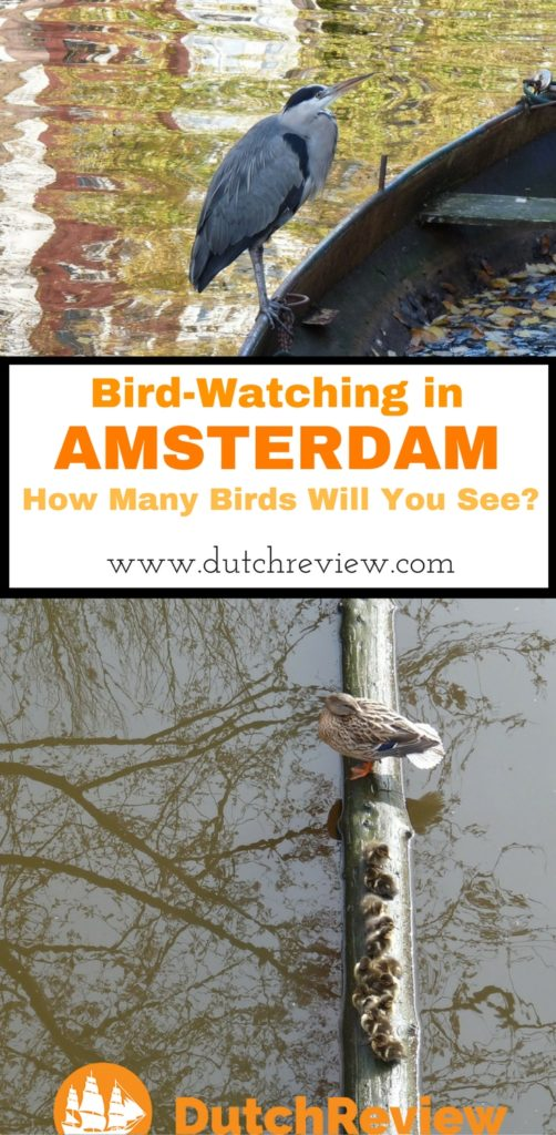 Our guide to the many types of birds you can see in the city of Amsterdam