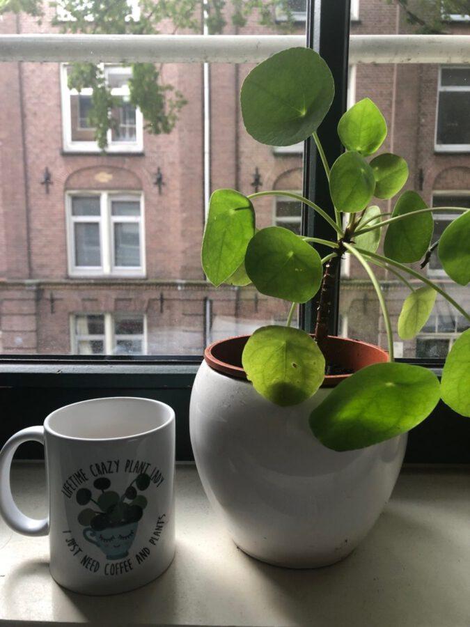 flowers vases in oost amsterdam
