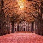 The Beauty The Hague photo
