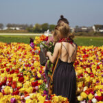 Haarlem_Tulips
