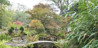 Visit Japanese Garden the Hague, tranquil places in the Hague