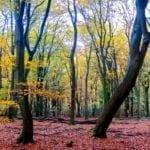 De-Hoge-Veluwe-Autumn