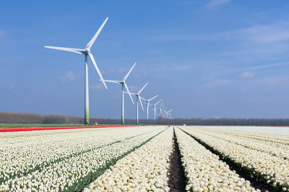 photo-of-wind-turbines-on-a-dutch-tulip-field
