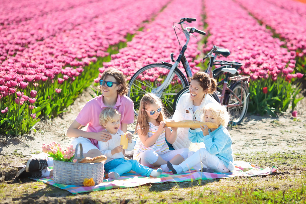 photo-of-a-family-having-a-picnic-in-front-of-a-dutch-tulip-field
