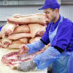 Cutting meat in slaughterhouse. The meat and sausage factory.