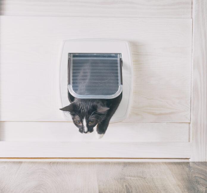 photo-black-cat-passing-through-cat-door-into-home