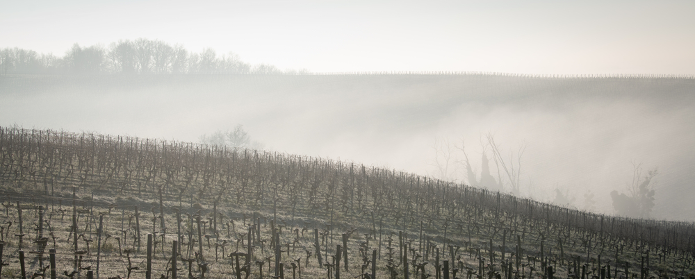 Photo-of-vineyard-in-frost
