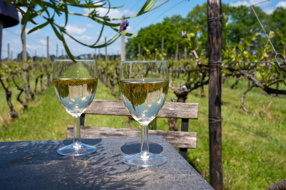Photo-of-wine-vineyard-Netherlands