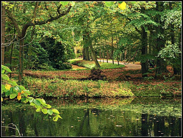 Rivendel…I mean Clingendael forest.