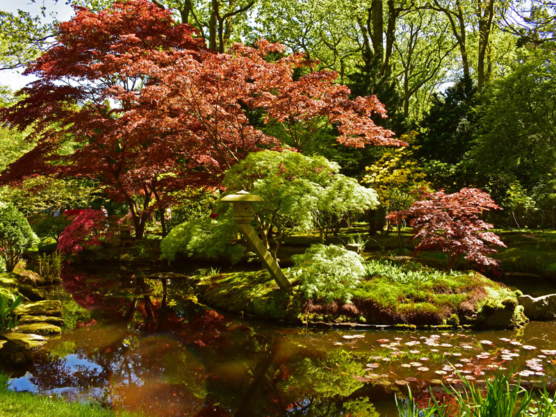 Japanese Gardens in the Hague