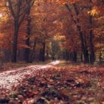 DutchReview_autumn-fall
