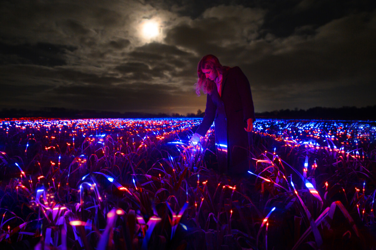 Photo-of-field-with-GROW-light-installation-project-Netherlands
