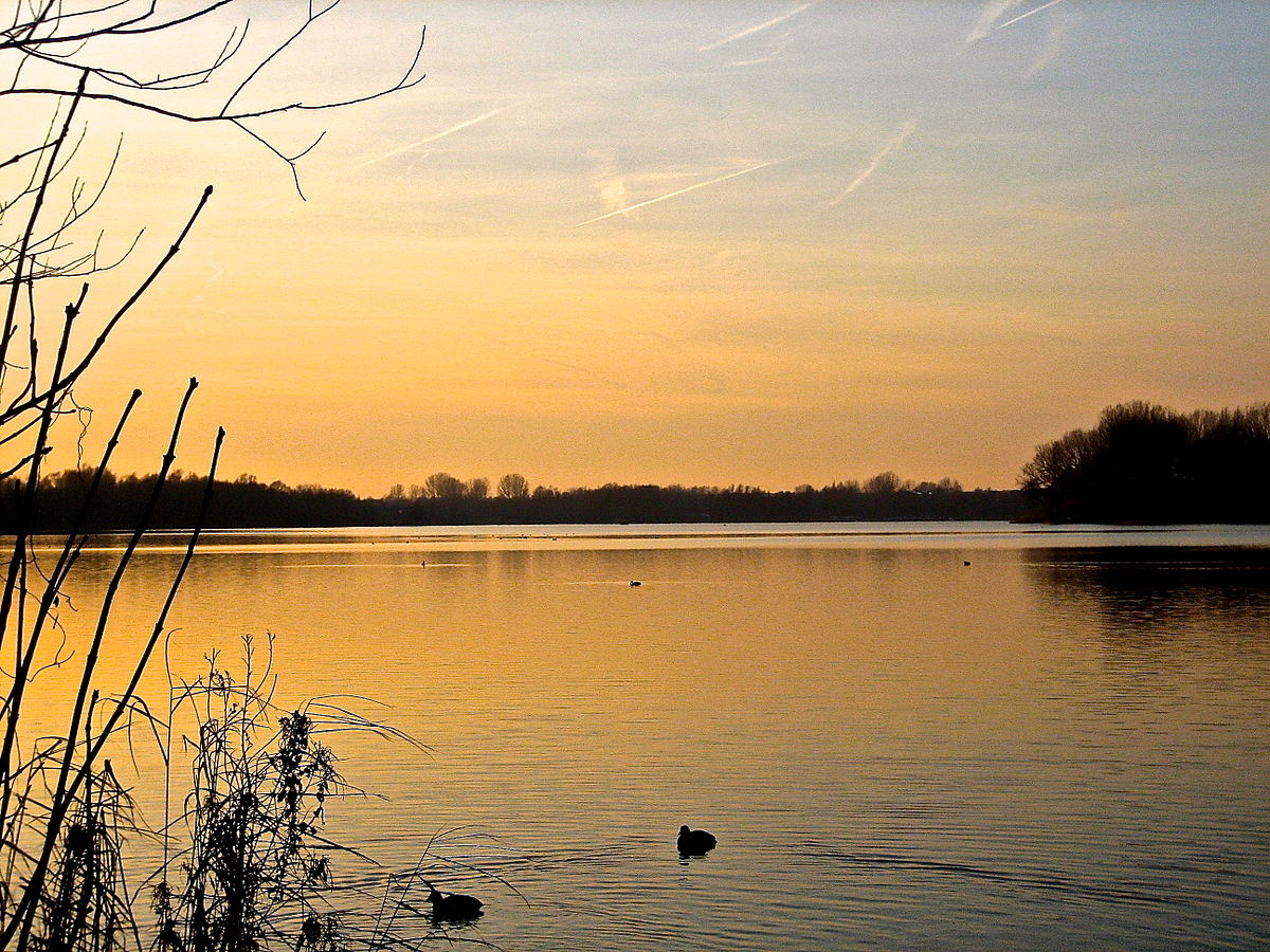 Peaceful orange sunset over lake with swimming ducks.