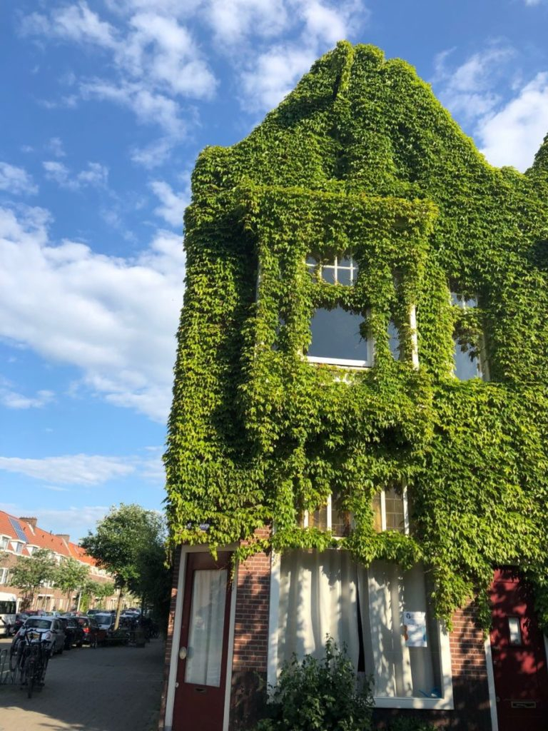 House plants in the Netherlands: a house covered in ivy in the Netherlands