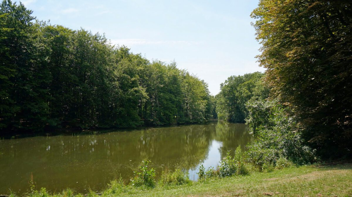 Haagse-Bos-forest-hiking-route-in-The-Hague