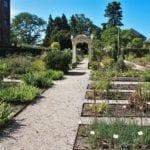 Hortus_botanicus_Leiden_Clusius_garden_(2)