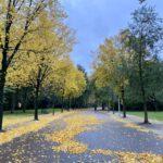 Vondelpark-Amsterdam-autumn-leaves