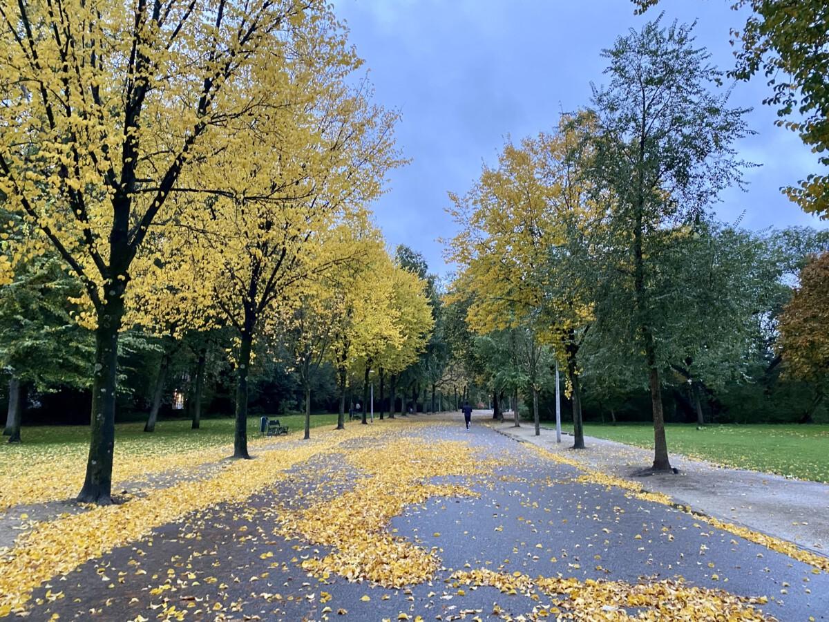 Vondelpark-Amsterdam-autumn-leaves-walking-trails