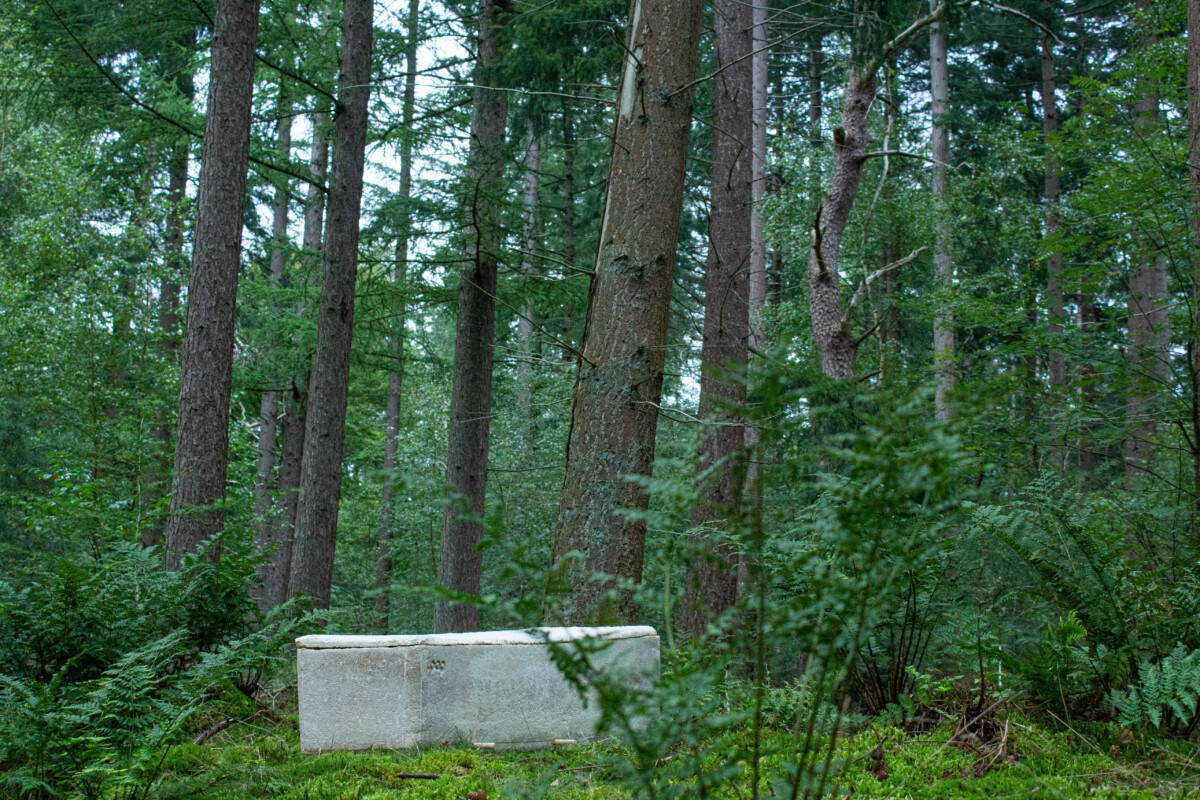 compostable coffin in woods