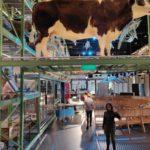 museum naturalis cow science