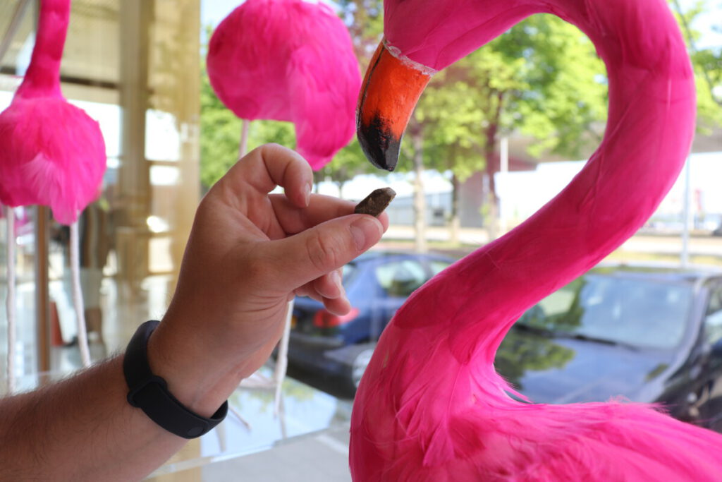 Man holding hash at a flamingo in a coffeeshop in Amsterdam