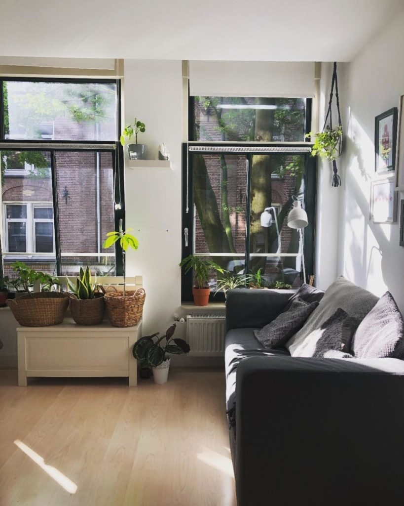 House plants in the Netherlands brighten a Dutch living room.