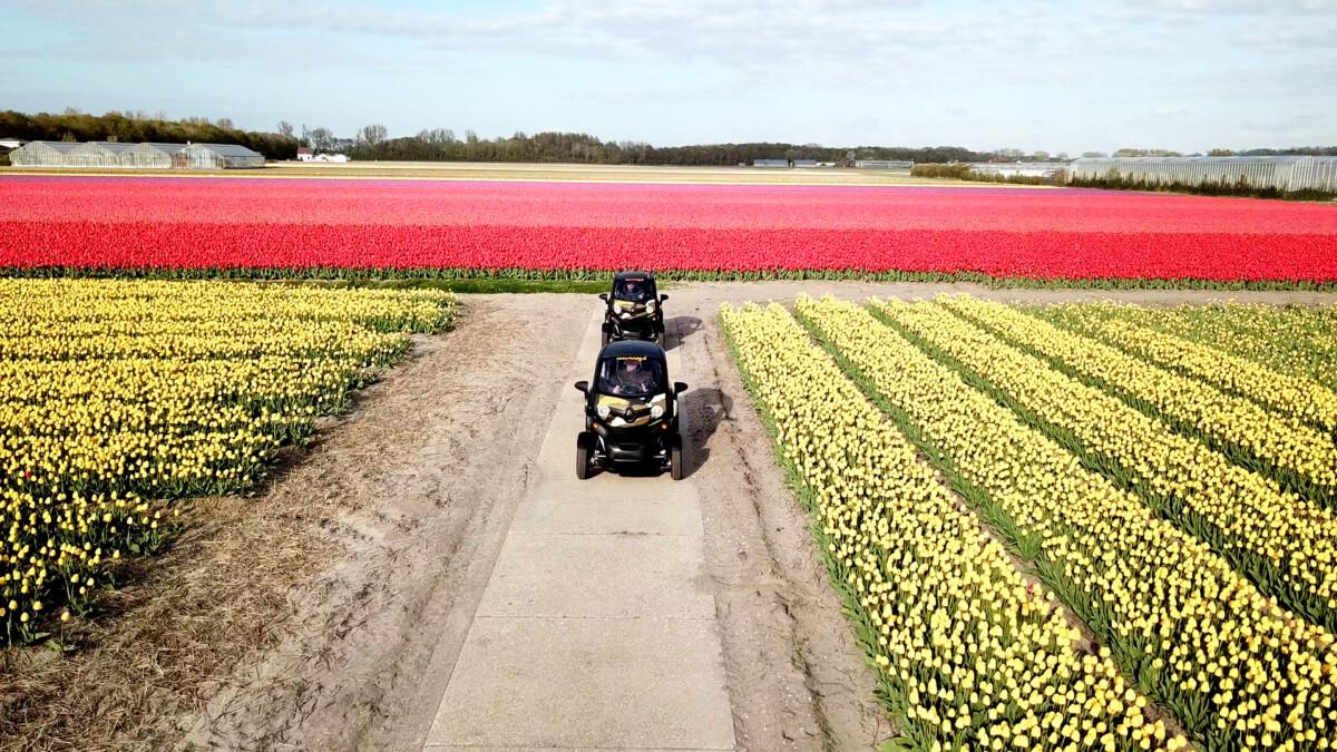 Photo-of-twizy-in-tulip-field-netherlands