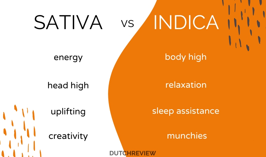 INFOGRAPHICS-SHOWING-DIFFERENCE-BETWEEN-SATIVA-AND-INDICA-IN-AMSTERDAM