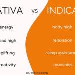 SATIVA-VS-INDICA-COFFEESHOPS-WEED-AMSTERDAM