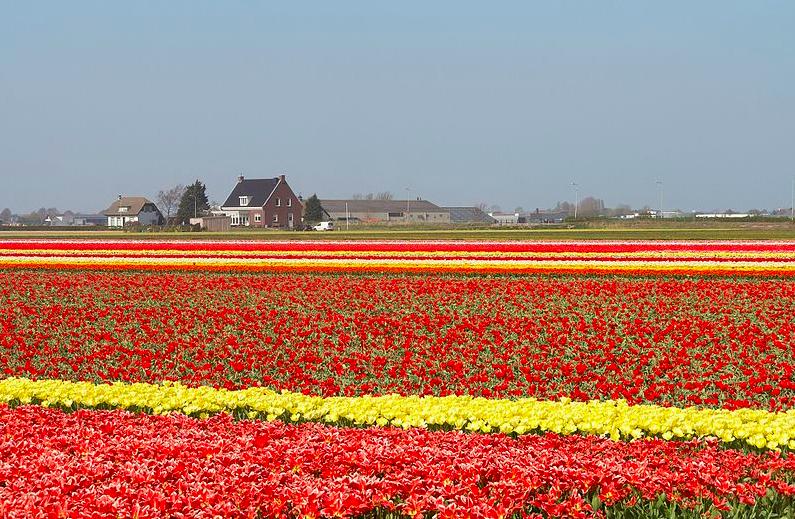 Villages in the Netherlands, Visiting Lisse