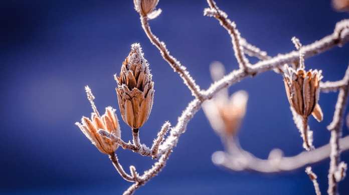 frost in the netherlands
