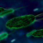bacteria biology antibiotics