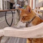 cat leiden