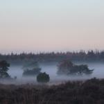 forest veluwe national park