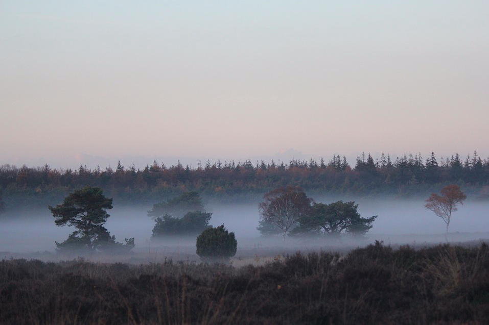photo-of-trees-and-mist-in-veluwe-national-park-in-the-netherlands