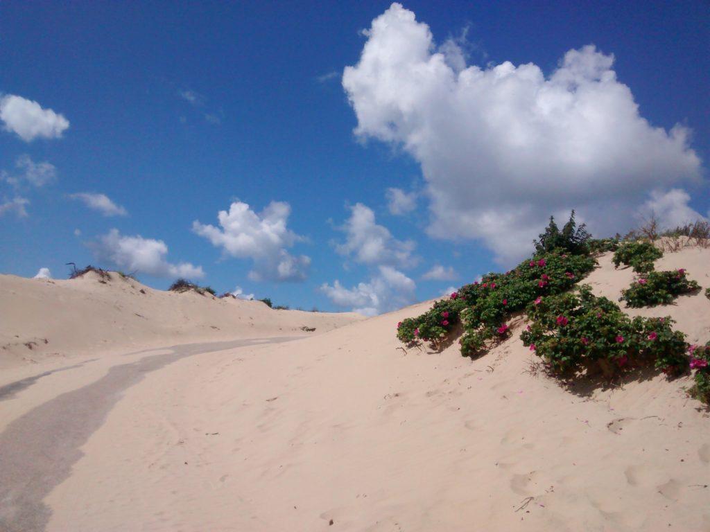 Some Dutch dunes (duinen) near Den Haag. Picture credit: Holly Vandyke