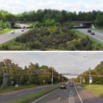 Ecoduct vs Den Haag Comparison