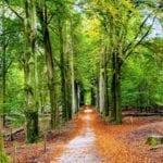 Veluwezoom_Hiking_Netherlands_Carmen_Monge