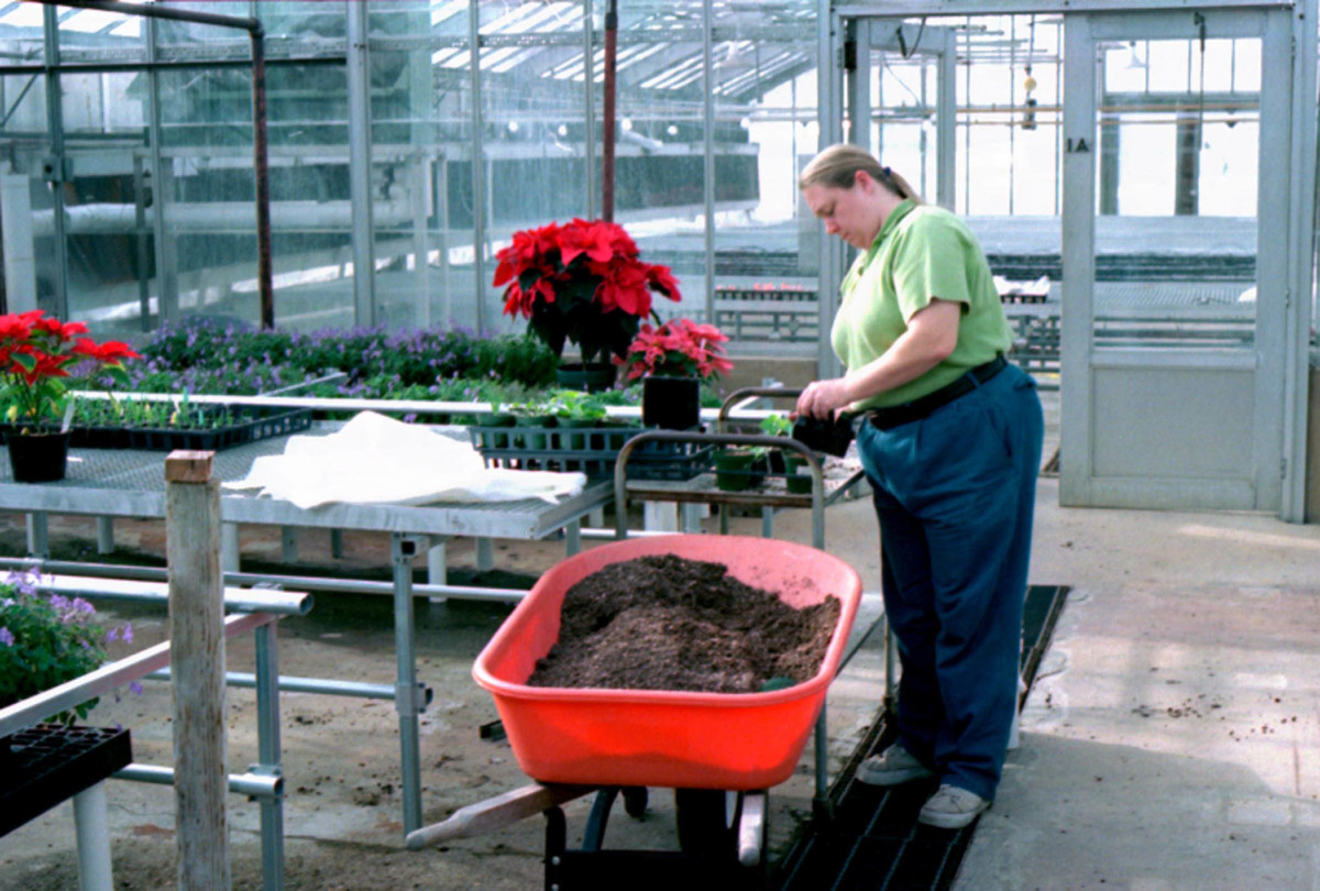 greenhouse worker with plants