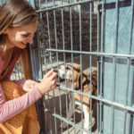 Woman looking for a dog to adopt in an animal sanctuary